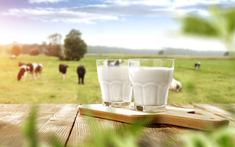 el origen de la leche