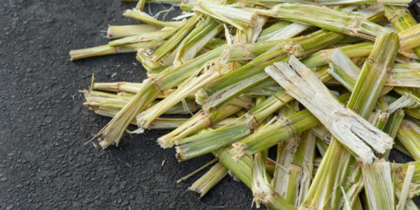 etiquetas de fibra de caña de azúcar - Labelfood